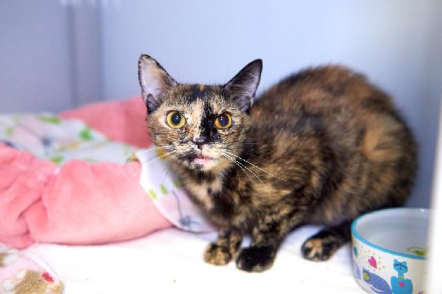 My name is Camisol and I am ready for adoption. Learn more about me!