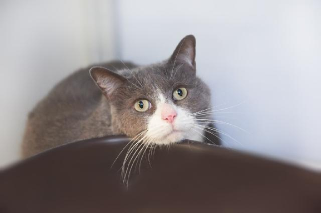 My name is Phrynie and I am ready for adoption. Learn more about me!