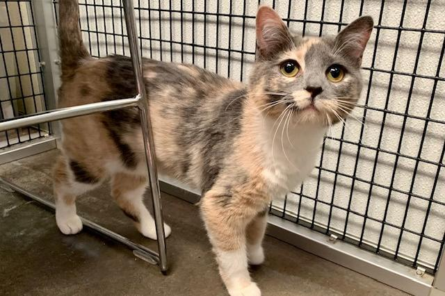 My name is Trinket and I am ready for adoption. Learn more about me!