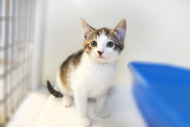 My name at SAFE Haven was Kizmitten and I was adopted!