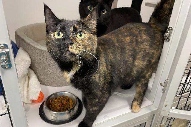 My name at SAFE Haven was Malea and I was adopted!