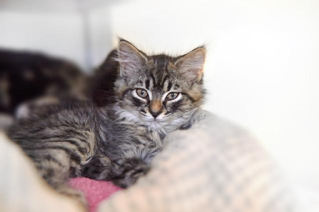 My name at SAFE Haven was Cuddles and I was adopted!