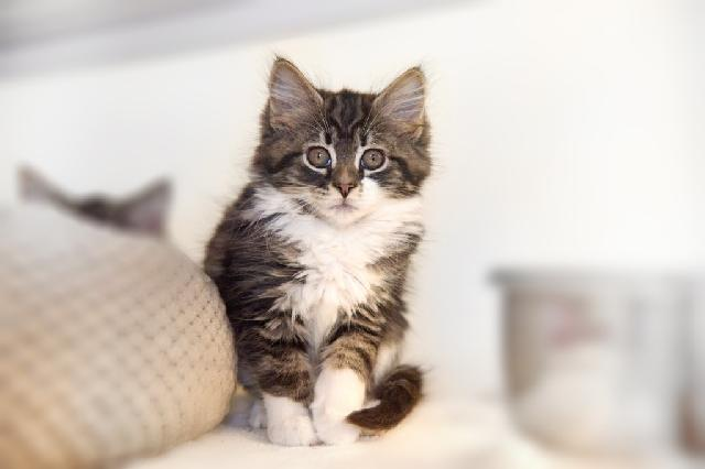 My name at SAFE Haven was Fierce Mittens and I was adopted!