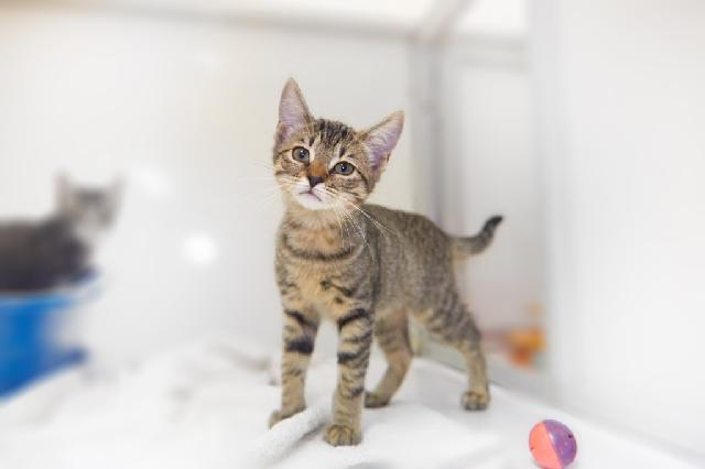 My name at SAFE Haven was Silica and I was adopted!
