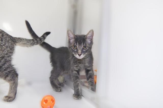 My name at SAFE Haven was L'argent and I was adopted!