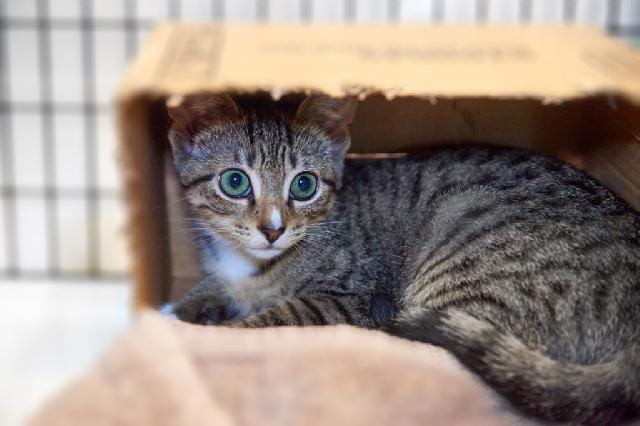My name at SAFE Haven was Jatobi and I was adopted!