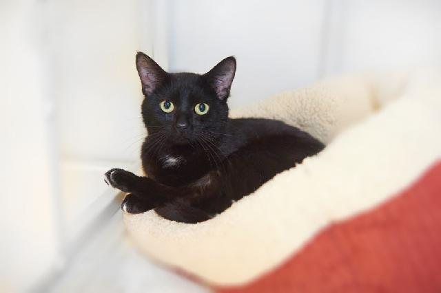 My name at SAFE Haven was Polo and I was adopted!