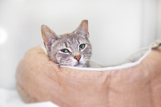 My name at SAFE Haven was Fog and I was adopted!