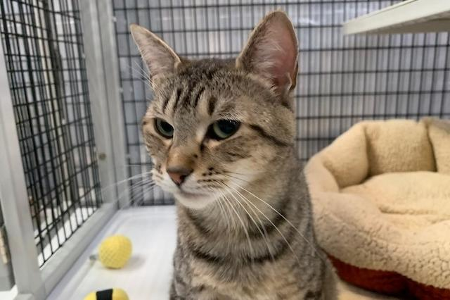 My name at SAFE Haven was Cocomelon and I was adopted!