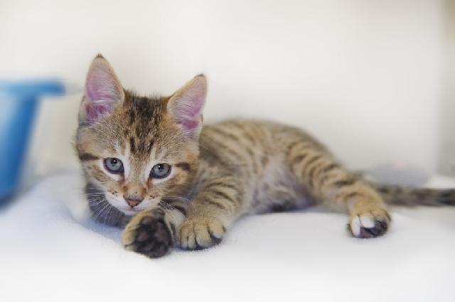 My name at SAFE Haven was Tom Tom and I was adopted!