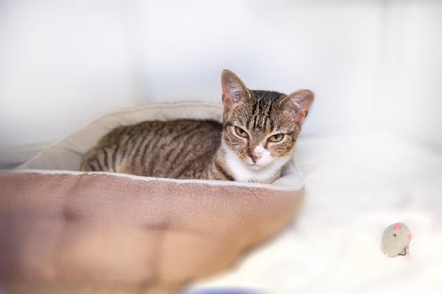 My name at SAFE Haven was Hela and I was adopted!