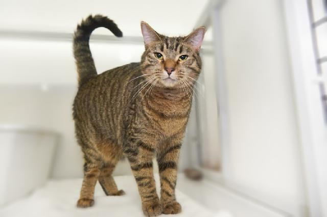 My name at SAFE Haven was Adair and I was adopted!