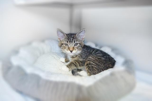 My name at SAFE Haven was Kerensa and I was adopted!