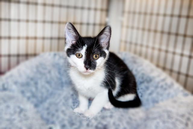My name at SAFE Haven was Cari and I was adopted!