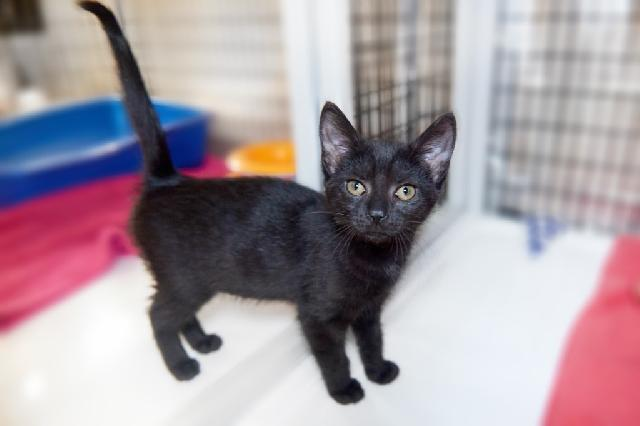 My name at SAFE Haven was Carli and I was adopted!