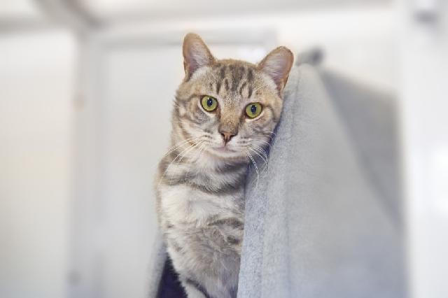 My name is Rain Drop and I am ready for adoption. Learn more about me!