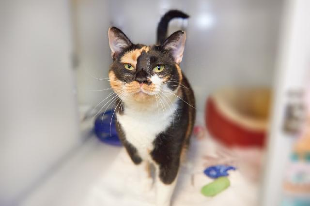 My name at SAFE Haven was Marbles and I was adopted!