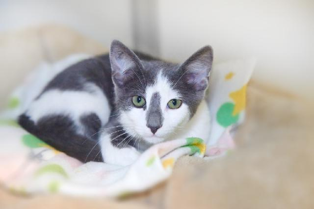 My name at SAFE Haven was Beaufort and I was adopted!