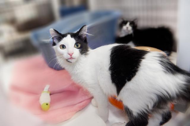 My name at SAFE Haven was Nevilles and I was adopted!
