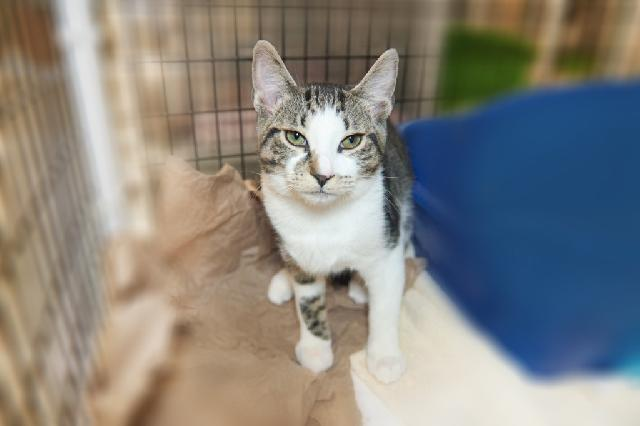 My name is Cedrick and I am ready for adoption. Learn more about me!