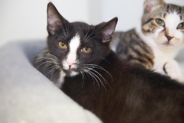 My name is Viktor K and I am ready for adoption. Learn more about me!