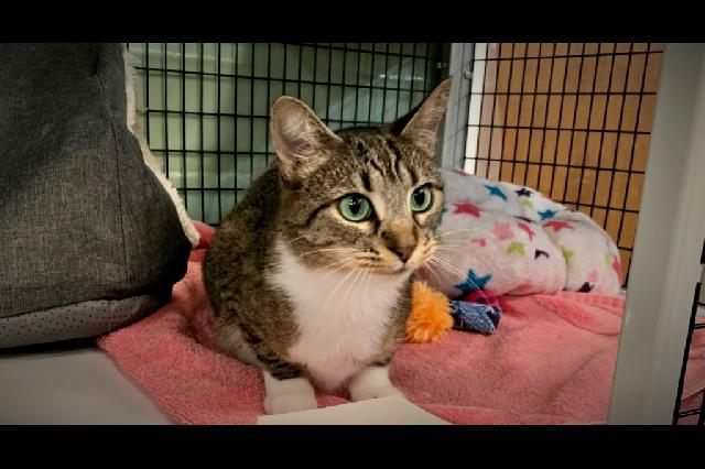 My name at SAFE Haven was Zena and I was adopted!