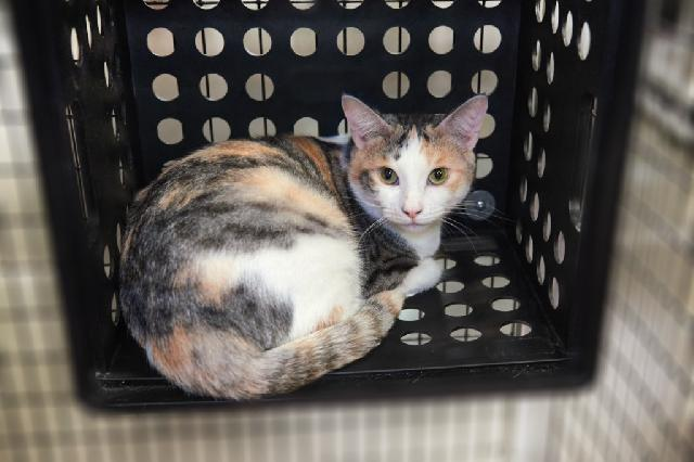 My name is Ayla and I am ready for adoption. Learn more about me!