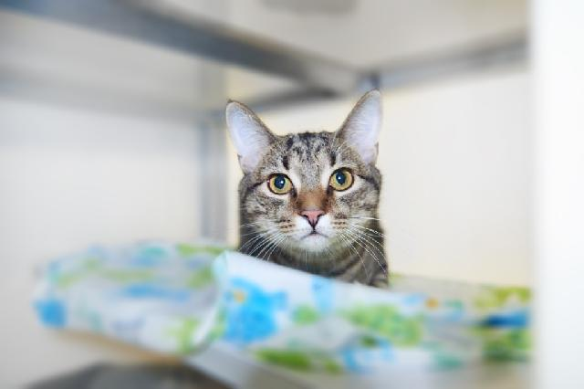 My name is Jaxin and I am ready for adoption. Learn more about me!