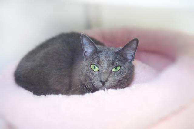 My name at SAFE Haven was Geranium and I was adopted!