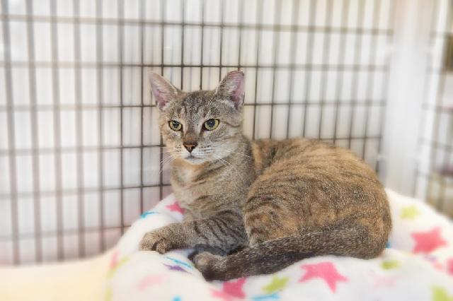 My name is Nisha and I am ready for adoption. Learn more about me!