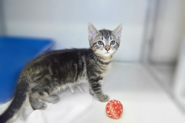 My name at SAFE Haven was Basmati and I was adopted!