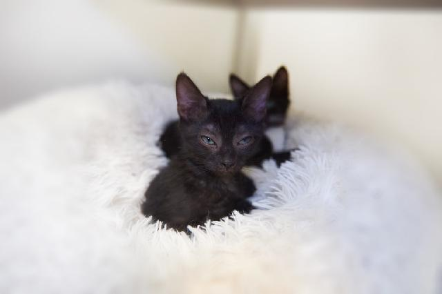 My name at SAFE Haven was Billie Holliday and I was adopted!