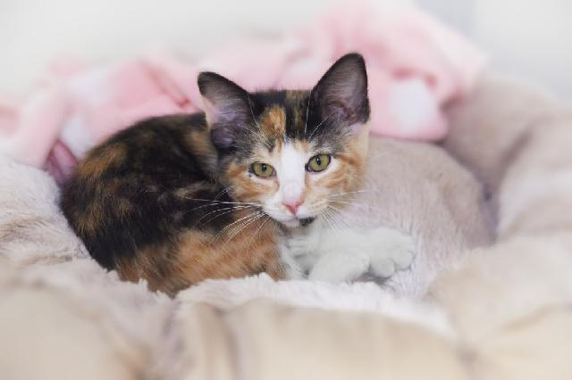 My name at SAFE Haven was Amylu and I was adopted!