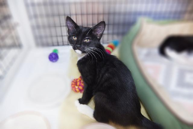 My name at SAFE Haven was Camea Mea and I was adopted!