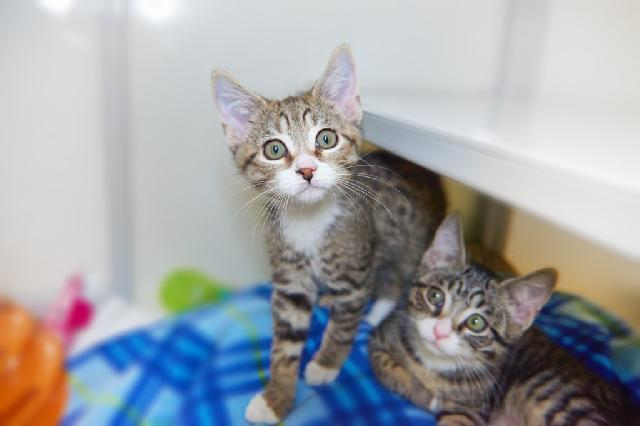 My name at SAFE Haven was BLT and I was adopted!