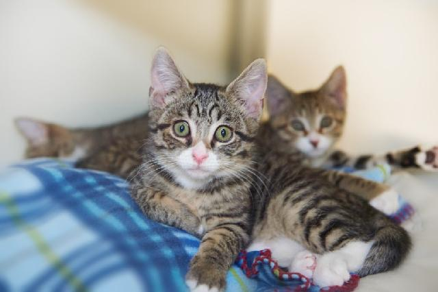 My name at SAFE Haven was PBJ and I was adopted!
