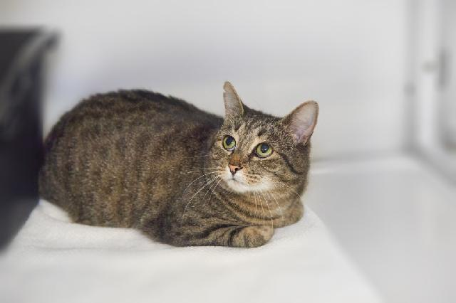 My name at SAFE Haven was Panko and I was adopted!