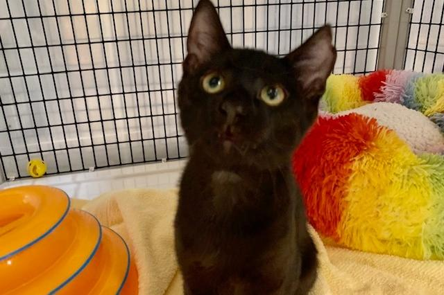 My name is Aurellius and I am ready for adoption. Learn more about me!