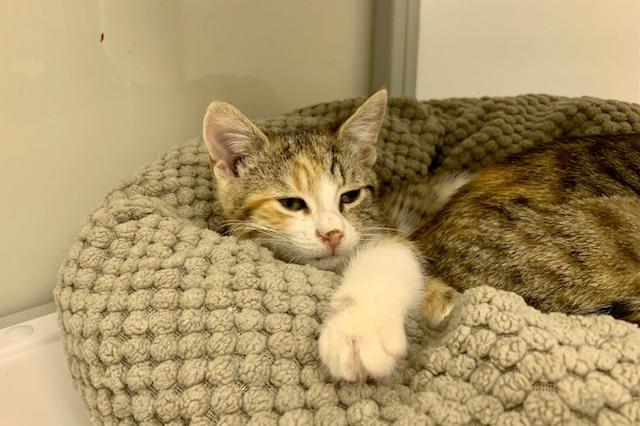 My name at SAFE Haven was Citronella and I was adopted!