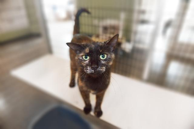 My name is Tilli and I am ready for adoption. Learn more about me!