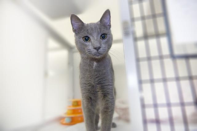 My name is Blueberry and I am ready for adoption. Learn more about me!