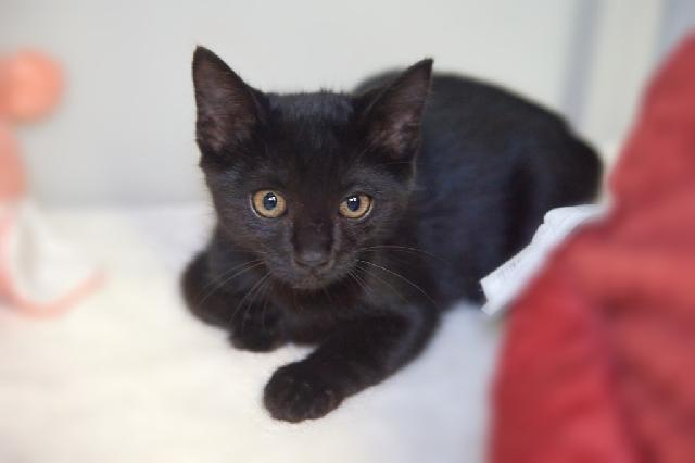 My name is Alastar and I am ready for adoption. Learn more about me!