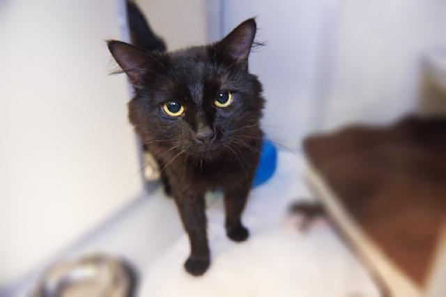 My name is Dizmo and I am ready for adoption. Learn more about me!
