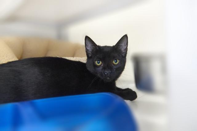 My name at SAFE Haven was Arlow and I was adopted!