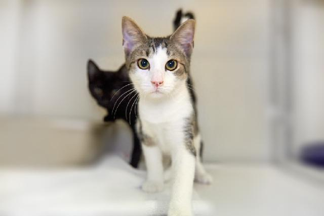 My name at SAFE Haven was Alyx and I was adopted!