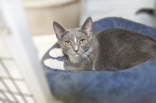 My name at SAFE Haven was Cap and I was adopted!