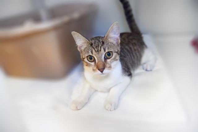 My name at SAFE Haven was Mimosa and I was adopted!