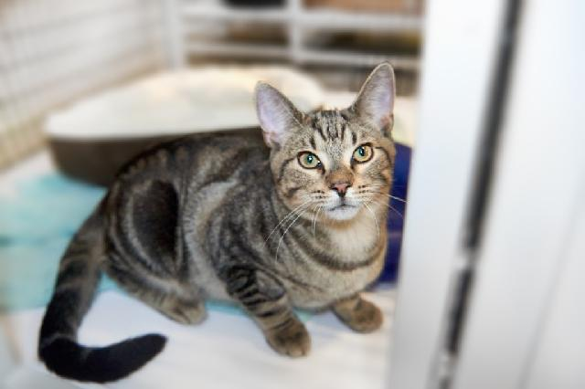 My name is Picollo and I am ready for adoption. Learn more about me!