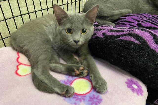 My name at SAFE Haven was Malibu and I was adopted!