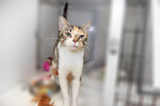 My name at SAFE Haven was Marjoram and I was adopted!